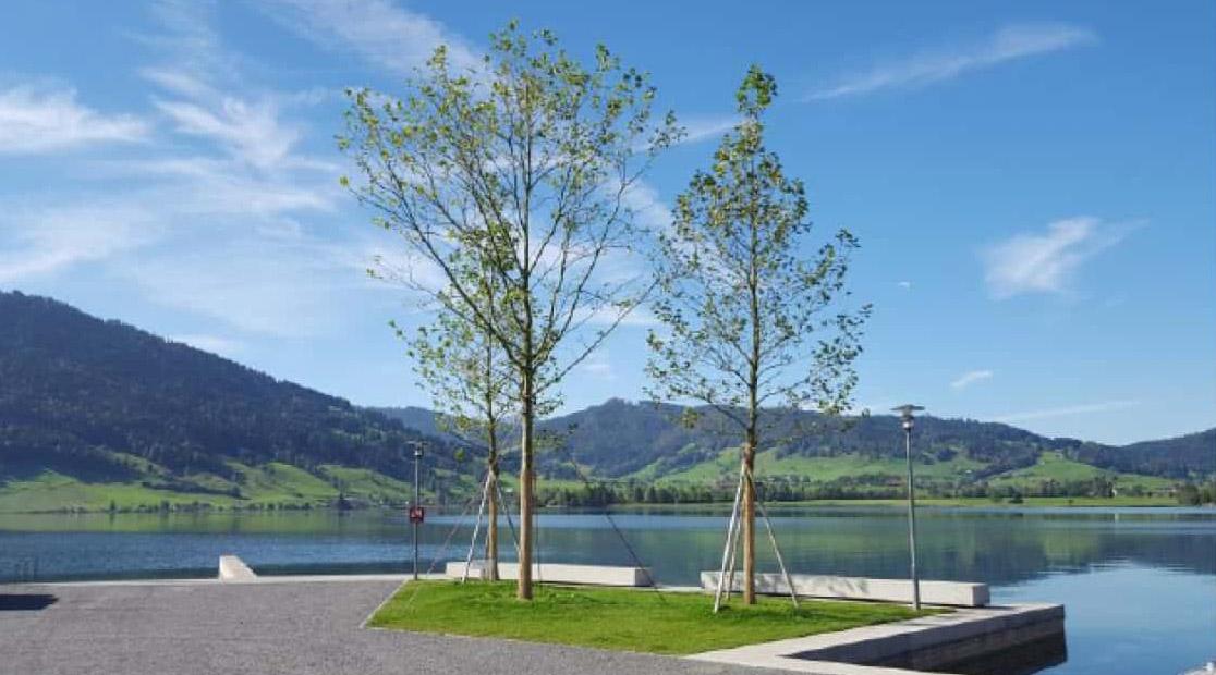 Seeufergestaltung Oberaegeri Beläge und Bäume