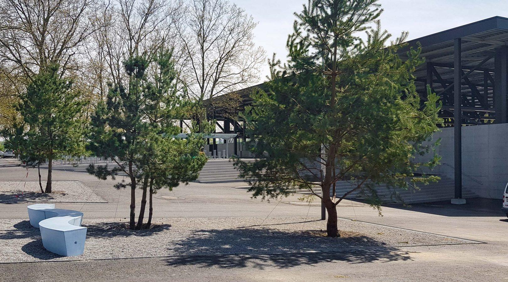 Sportanlage Baumpflanzung