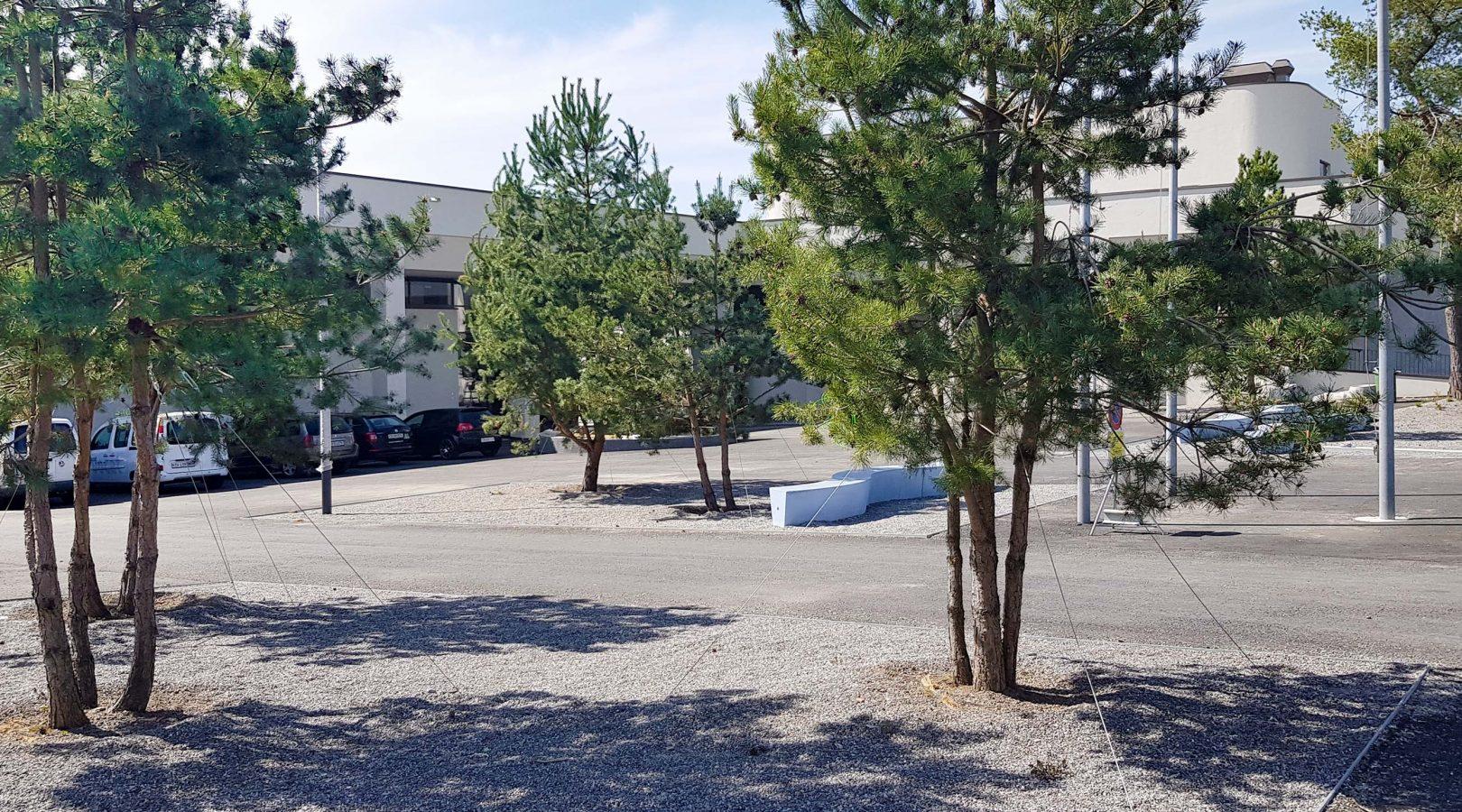 Sportanlage Baumpflanzung Parkplatz